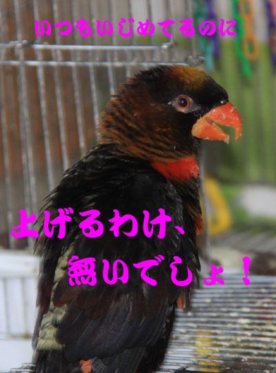 5_ピンナ