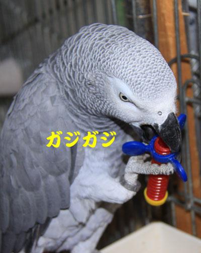4_カンナおもちゃ1