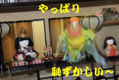 45_綱祭りリコ2