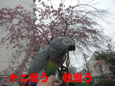 3_ナニ思う