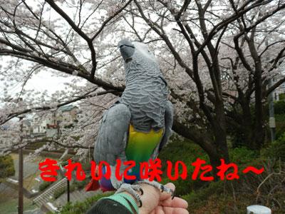 8_みごと