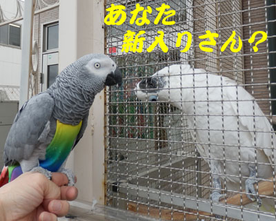 2_新入りさん