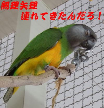 4_チャッピ