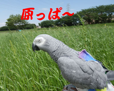 1_原っぱ