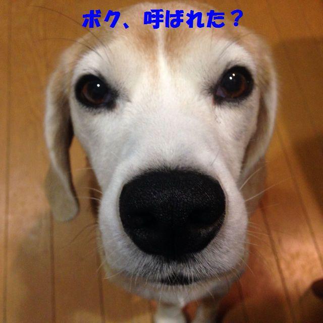 7320088_21184450_ron.jpg