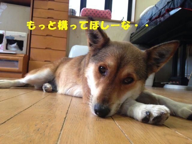 7320088_2129195782_nazu.jpg