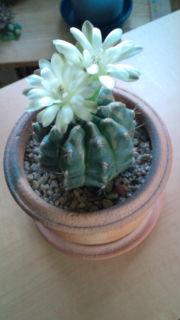 cactus_20150310110117747.jpg