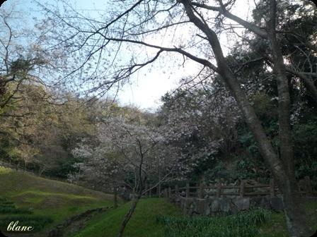 衣笠山公園(5)