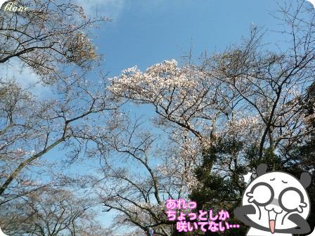 衣笠山公園(3)