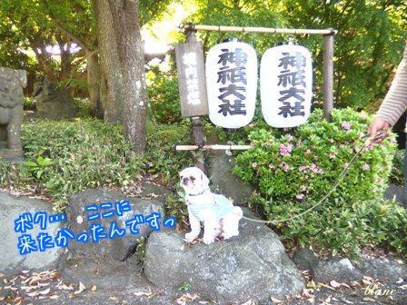 神祇大社(1)