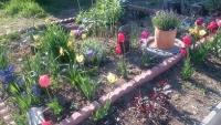 ひばりや庭