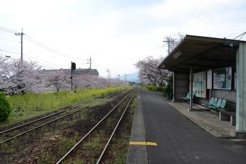 桜無残(4)