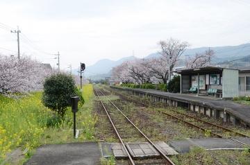 桜無残(5)