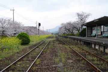 桜無残(6)