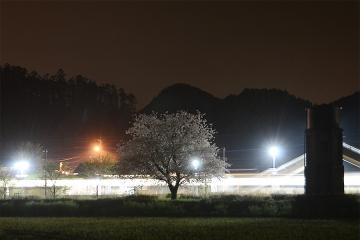 厳木駅夜桜2015(6)