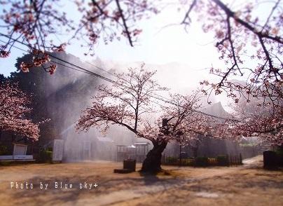 功山寺-桜3
