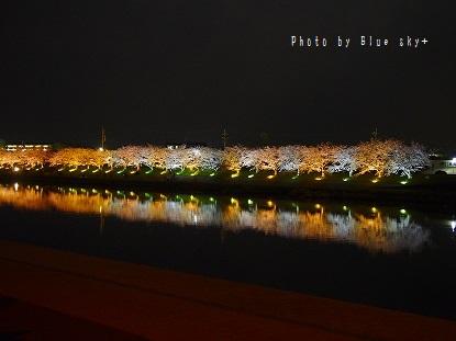 夜桜-今川1