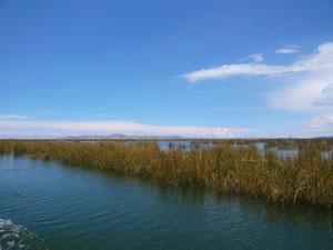 チチカカ湖P1290329.jpg