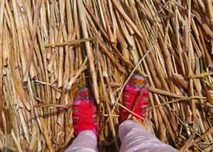 チチカカ湖P1290332.jpg