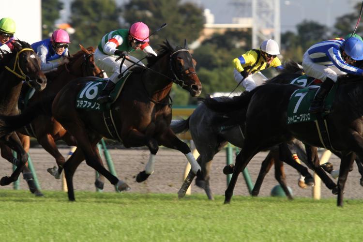 2014 ステファノス富士S