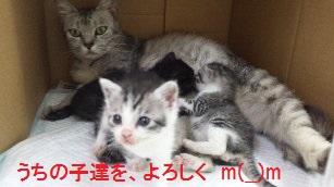 3_160950.jpg