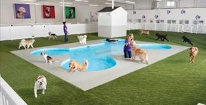 ark-pet-resort_convert_20150312001252.jpg