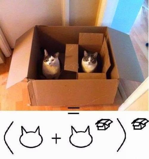 箱の中の猫数式