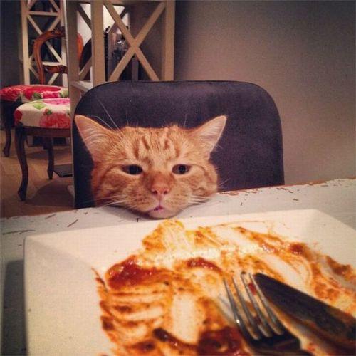 お気に召さないトマトソース
