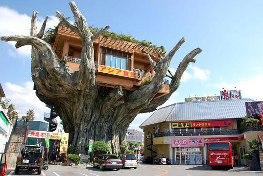 ツリーハウス沖縄