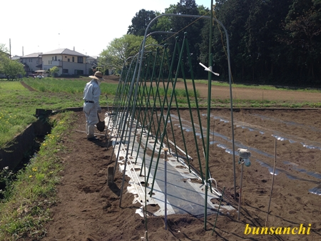 トマト支柱④
