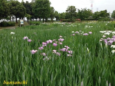 平成の森公園①