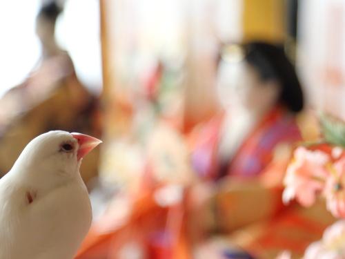 siro chann ni kinennsatuei no osigoto onegai (3)
