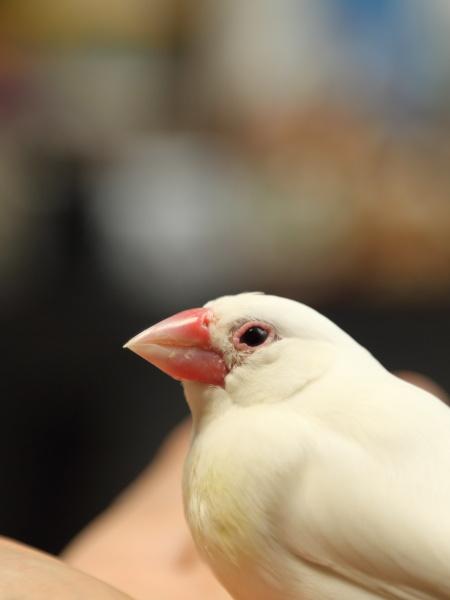 hane yogoretemasu (2)