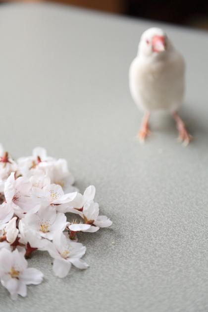 tannjouzuki no oiwai (4)