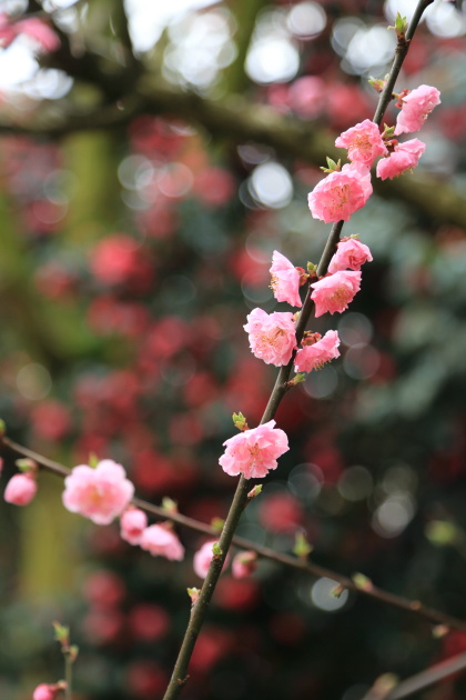 2015-04-12 takaoka kojoukouenn (5)
