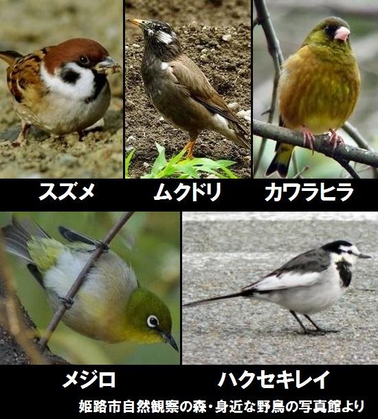 我家の裏庭を訪問する野鳥