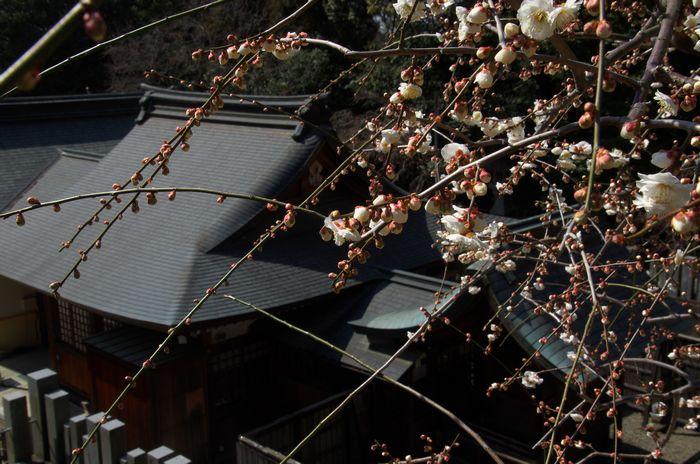 15-3-1-1大県神社
