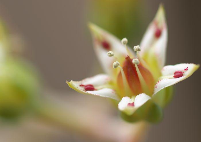15-5-10-1サボテンの花
