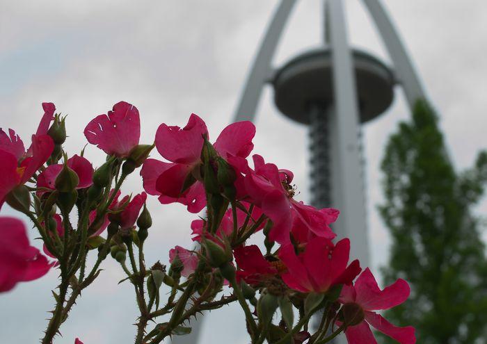 15-6-1-1バラとタワー