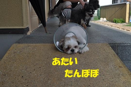 20150813タマケイ1