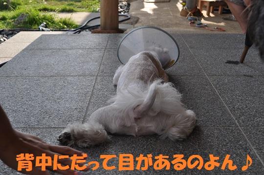 20150813パラボナたんぽぽ1