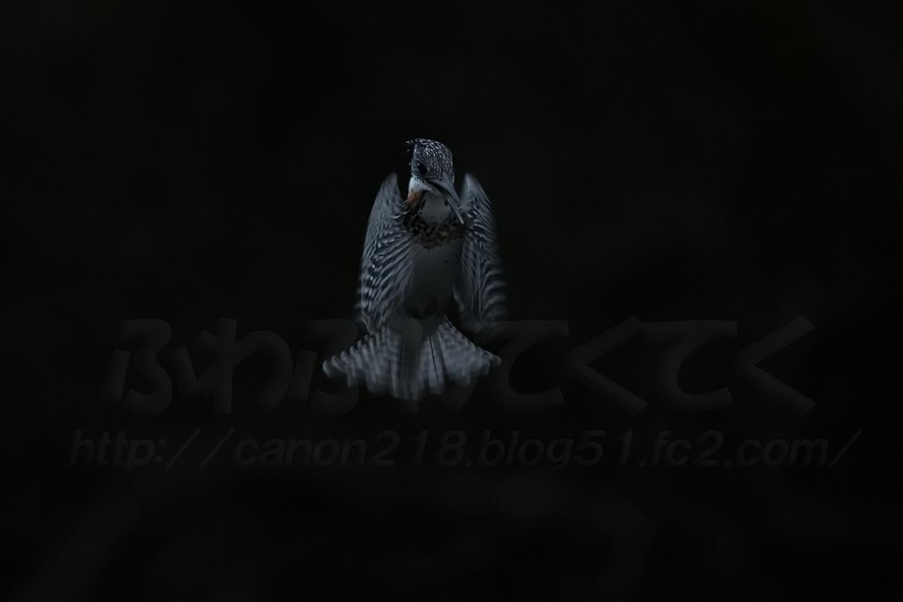 1DX_1942LR_1502.jpg