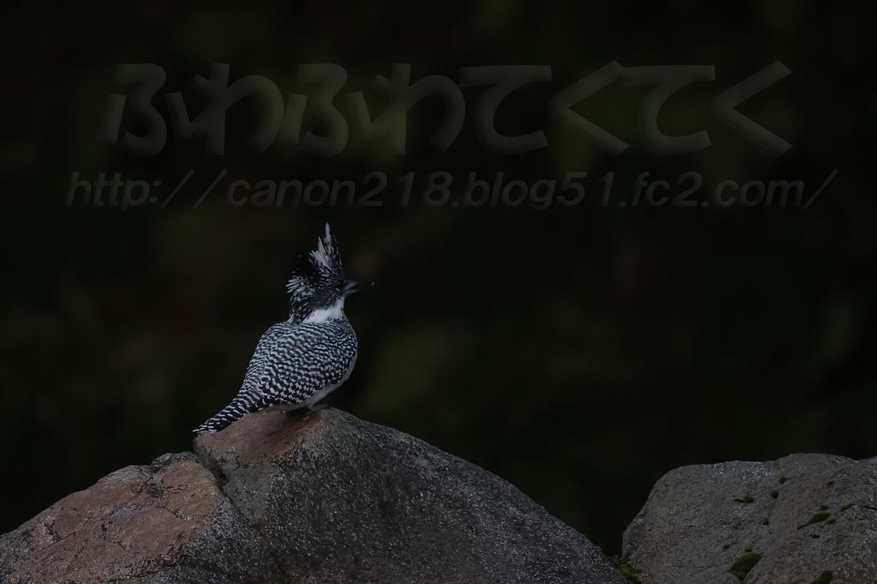 1DX_2945LR_1503.jpg