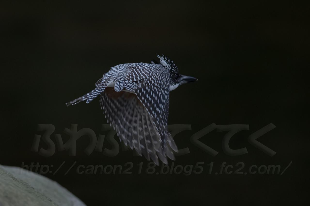 1DX_3151LR_1503.jpg