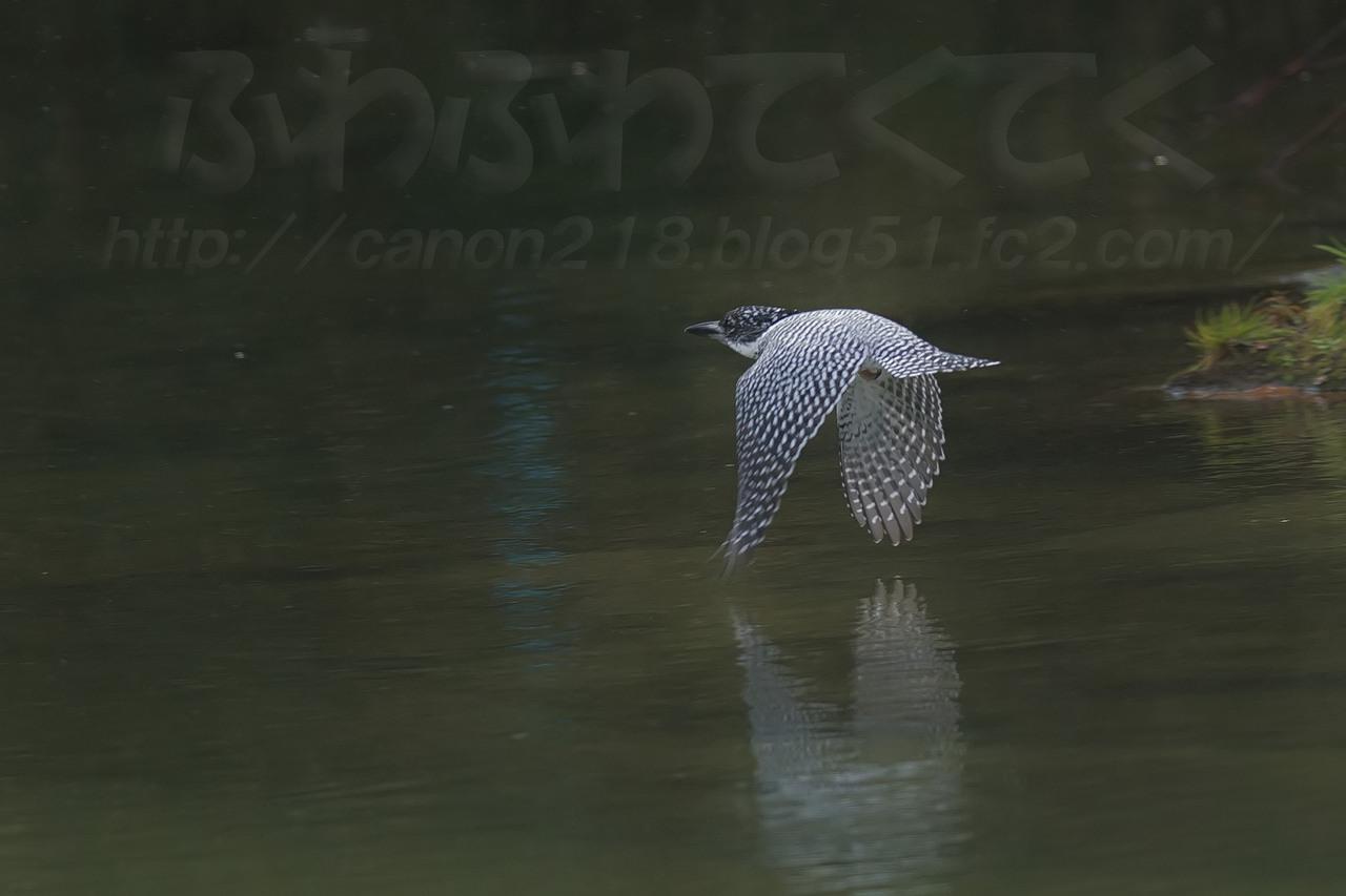 1DX_6998LR_1412.jpg
