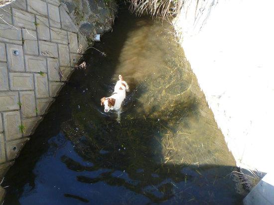 2015.02.22ホシハジロ2