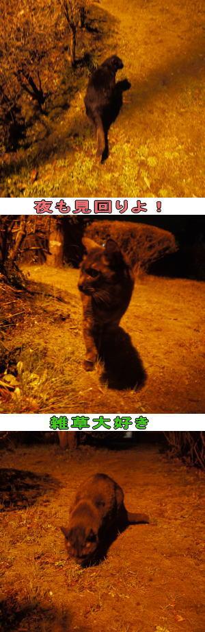 夜の公園と猫