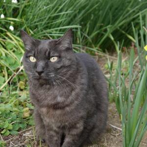 こちらがAz猫