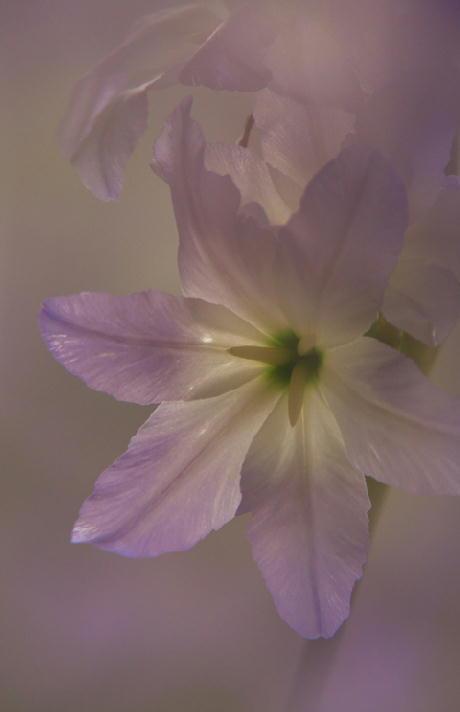 紫の花-160