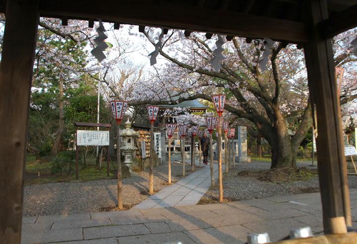 日枝神社-308